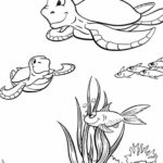 Coloring Pages Of Turtles For Toddlers