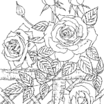 Printable Coloring Pages For Adults Roses