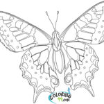 Printable Butterfly Coloring Pages For Adults