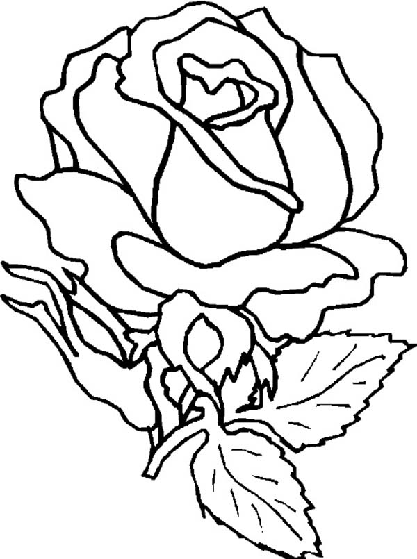 Amazing Rose Flower Coloring Page - Download & Print ...