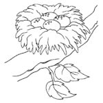 Coloring Pages Birds Nest