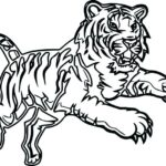 Tiger Coloring Pages Realistic