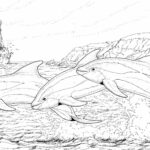 Coloring Pages Dolphins Jumping