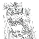 Yorkie Colouring Pages