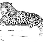 Coloring Pages Free Printable Animals