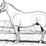 Printable Arabian Horse Coloring Pages