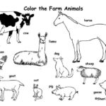 Coloring Pages Of Animals Pdf