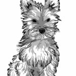 Yorkie Coloring Pages Print